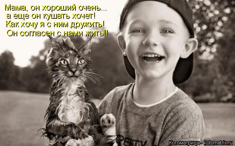 Котоматрица: Мама, он хороший очень... а еще он кушать хочет! Как хочу я с ним дружить! Он согласен с нами жить!!