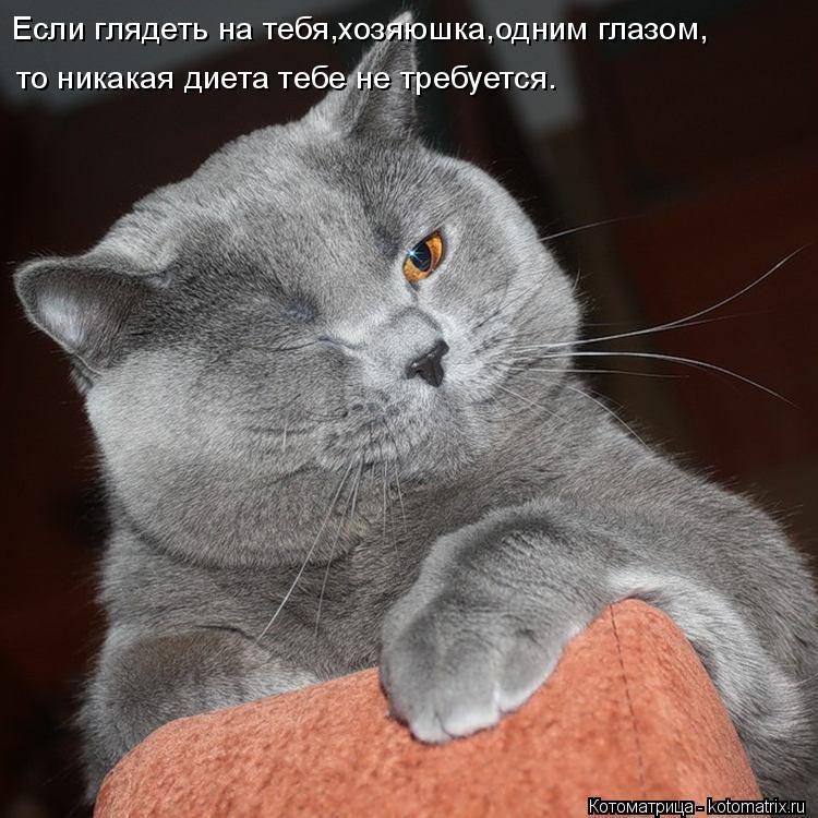 Котоматрица: Если глядеть на тебя,хозяюшка,одним глазом, то никакая диета тебе не требуется.