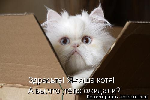 Котоматрица: Здрасьте! Я-ваша котя! А вы,что ,тётю ожидали?