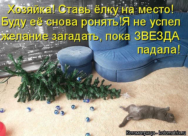 Котоматрица: Хозяйка! Ставь ёлку на место! Буду её снова ронять!Я не успел желание загадать, пока ЗВЕЗДА падала!