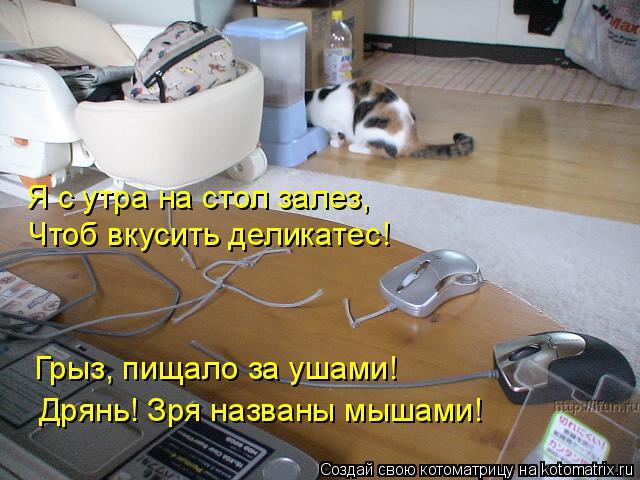 Котоматрица: Я с утра на стол залез, Чтоб вкусить деликатес! Грыз, пищало за ушами! Дрянь! Зря названы мышами!