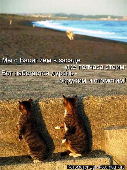 Котоматрица: Мы с Василием в засаде  уже полчаса стоим: Вот набегается дурень - окружим и отомстим!