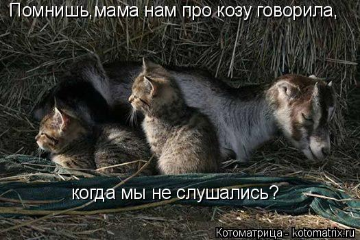 Котоматрица: Помнишь,мама нам про козу говорила, когда мы не слушались?