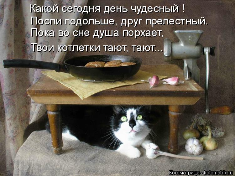 Котоматрица: Какой сегодня день чудесный ! Поспи подольше, друг прелестный. Пока во сне душа порхает, Твои котлетки тают, тают...
