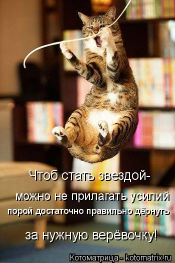 Котоматрица: Чтоб стать звездой- можно не прилагать усилий  порой достаточно правильно дёрнуть за нужную верёвочку!