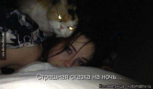 Котоматрица: Страшная сказка на ночь...