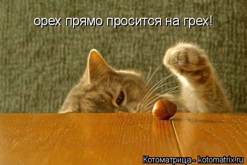 Котоматрица: орех прямо просится на грех!