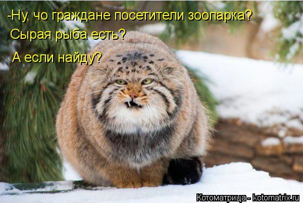 Котоматрица: -Ну, чо граждане посетители зоопарка? Сырая рыба есть? А если найду?