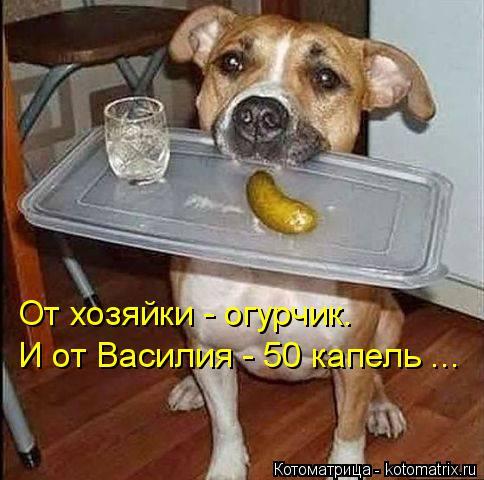 Котоматрица: От хозяйки - огурчик. И от Василия - 50 капель ...