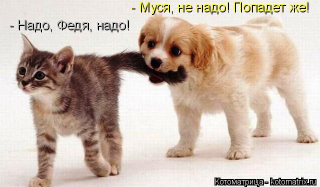 Котоматрица: - Муся, не надо! Попадет же!   - Надо, Федя, надо!