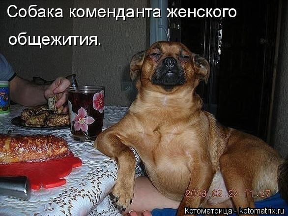 http://kotomatrix.ru/images/lolz/2014/11/23/kotomatritsa_R4B.jpg