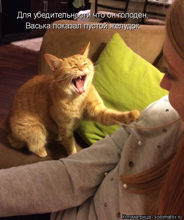 Котоматрица: Для убедительности что он голоден, Васька показал пустой желудок.