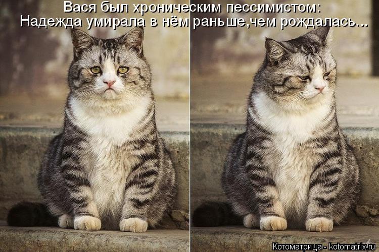 Котоматрица: Вася был хроническим пессимистом: Надежда умирала в нём раньше,чем рождалась...