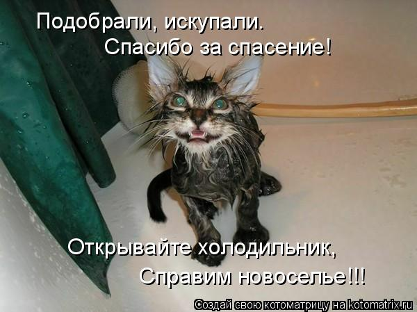 Котоматрица: Подобрали, искупали. Спасибо за спасение! Открывайте холодильник, Справим новоселье!!!