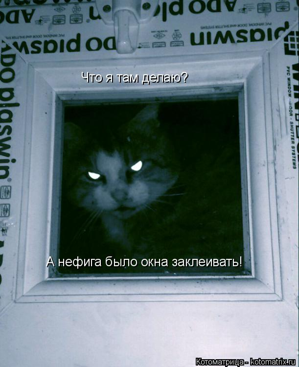 Котоматрица: Что я там делаю?  А нефига было окна заклеивать!