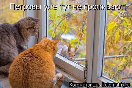 Котоматрица: Петровы уже тут не проживают!