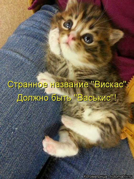 """Котоматрица: Должно быть """"Васькис""""! Странное название """"Вискас""""."""