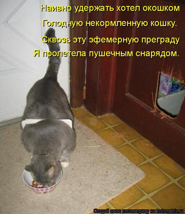 Котоматрица: Наивно удержать хотел окошком Голодную некормленную кошку. Сквозь эту эфемерную преграду Я пролетела пушечным снарядом.