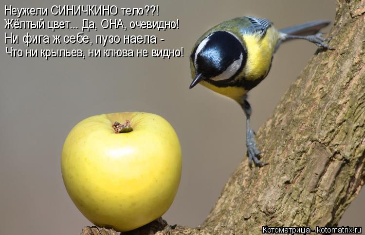 Котоматрица: Неужели СИНИЧКИНО тело??! Жёлтый цвет... Да, ОНА, очевидно! Ни фига ж себе, пузо наела - Что ни крыльев, ни клюва не видно!