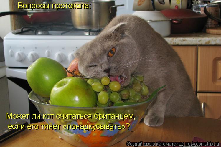 Котоматрица: Вопросы протокола: Может ли кот считаться британцем,  если его тянет «понадкусывать»?