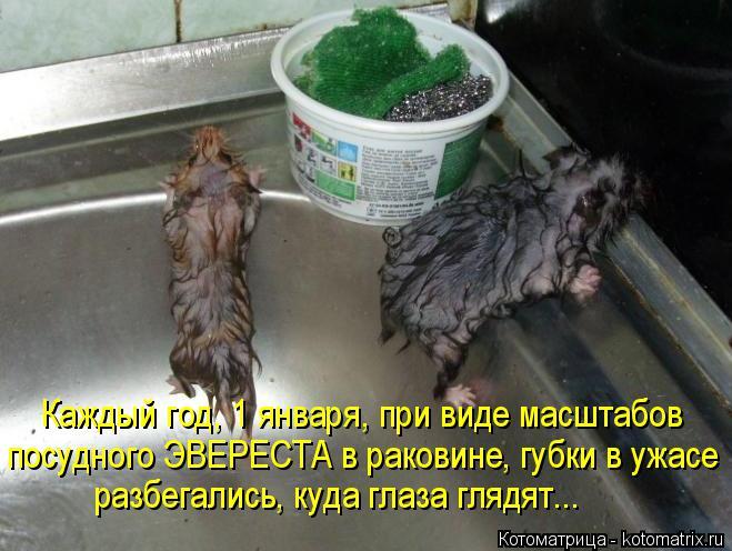 Котоматрица: Каждый год, 1 января, при виде масштабов посудного ЭВЕРЕСТА в раковине, губки в ужасе разбегались, куда глаза глядят...