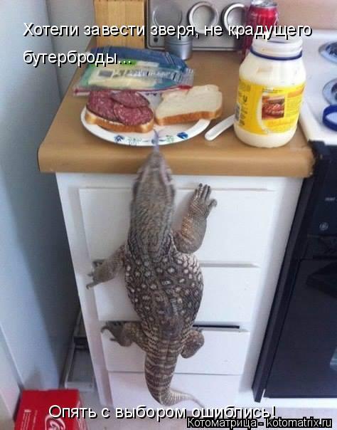 Котоматрица: Хотели завести зверя, не крадущего  бутерброды... Опять с выбором ошиблись!
