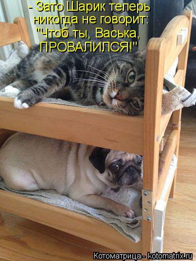 """Котоматрица: - Зато Шарик теперь никогда не говорит: """"Чтоб ты, Васька, ПРОВАЛИЛСЯ!"""""""