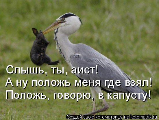 http://kotomatrix.ru/images/lolz/2014/11/26/kotomatritsa_vF.jpg