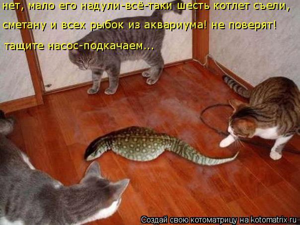 Котоматрица: нет, мало его надули-всё-таки шесть котлет съели, сметану и всех рыбок из аквариума! не поверят! тащите насос-подкачаем...