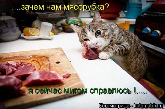 Котоматрица: ....зачем нам мясорубка? я сейчас мигом справлюсь !.....