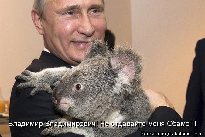 Котоматрица: Владимир Владимирович! Не отдавайте меня Обаме!!!