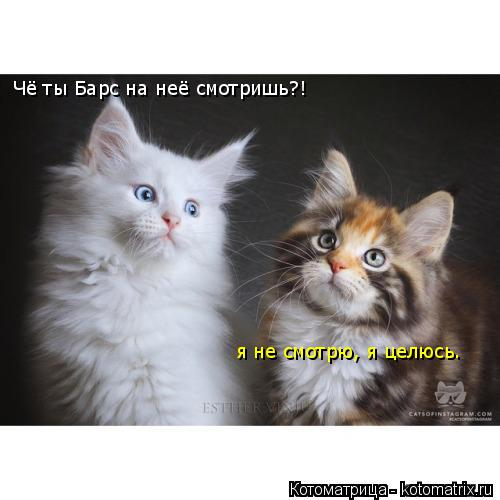 Котоматрица: Чё ты Барс на неё смотришь?! я не смотрю, я целюсь.