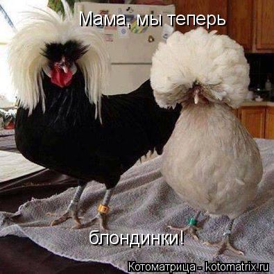 Котоматрица: Мама, мы теперь  блондинки!