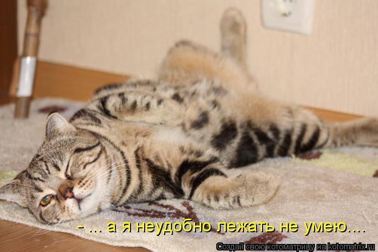 Котоматрица: - ... а я неудобно лежать не умею....
