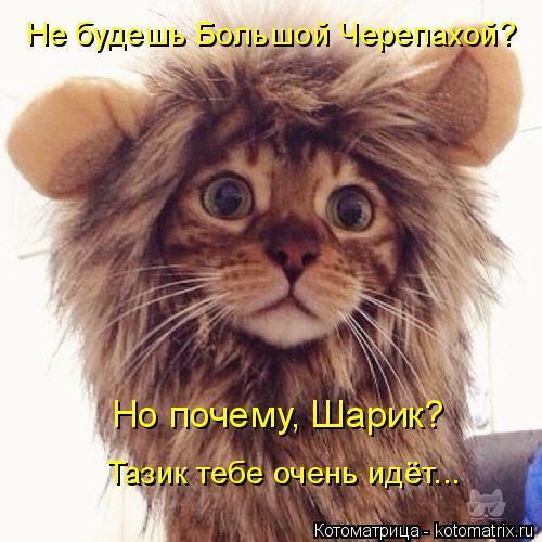 http://kotomatrix.ru/images/lolz/2014/11/28/kotomatritsa_t.jpg