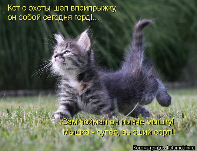 http://kotomatrix.ru/images/lolz/2014/11/29/kotomatritsa_5Y.jpg