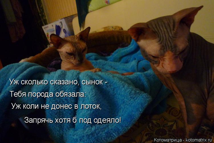Котоматрица: Уж сколько сказано, сынок -  Тебя порода обязала: Уж коли не донес в лоток,  Запрячь хотя б под одеяло!