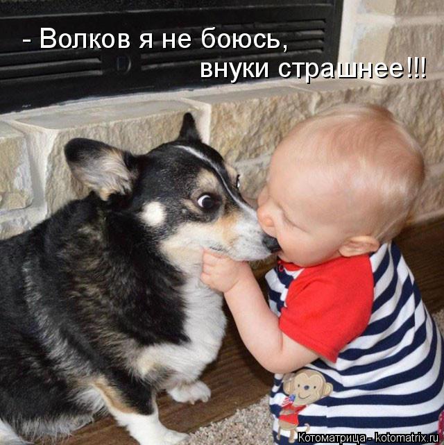 Котоматрица: - Волков я не боюсь, внуки страшнее!!!