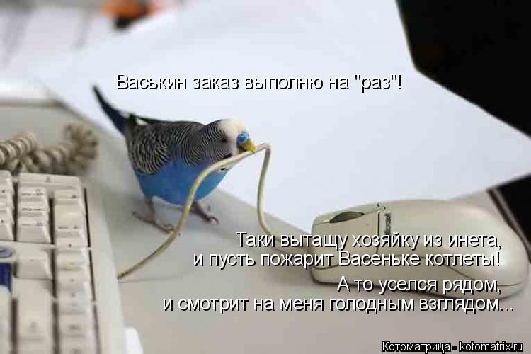 """Котоматрица: Васькин заказ выполню на """"раз""""! Таки вытащу хозяйку из инета,  и пусть пожарит Васеньке котлеты! и смотрит на меня голодным взглядом... А то ус"""