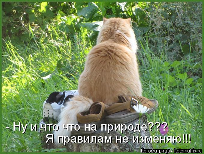 Котоматрица: - Ну и что что на природе??? Я правилам не изменяю!!!