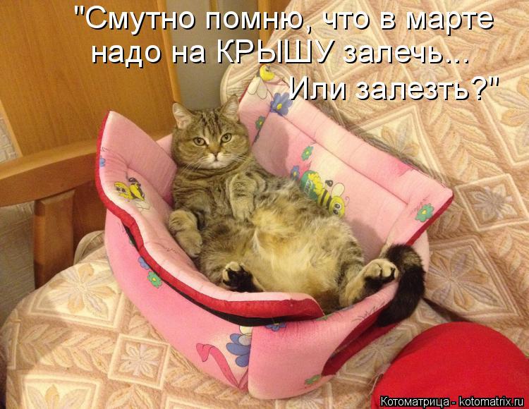"""Котоматрица: """"Смутно помню, что в марте  надо на КРЫШУ залечь... Или залезть?"""""""