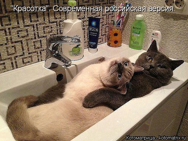 http://kotomatrix.ru/images/lolz/2014/11/29/kotomatritsa_xt.jpg