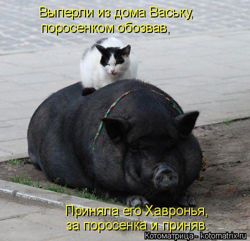 Котоматрица: Выперли из дома Ваську,  поросенком обозвав,  Приняла его Хавронья,  за поросенка и приняв.