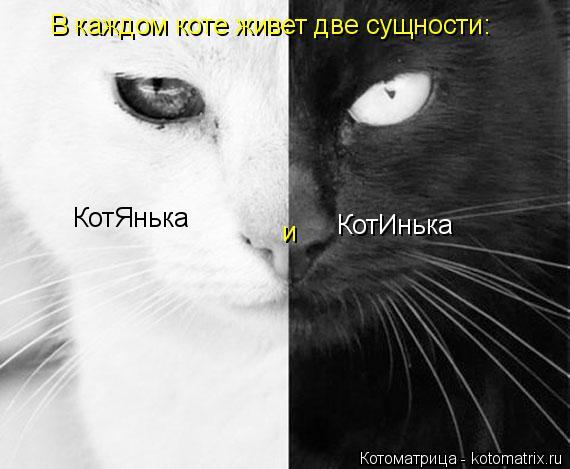 Котоматрица: В каждом коте живет две сущности:  КотЯнька и  КотИнька