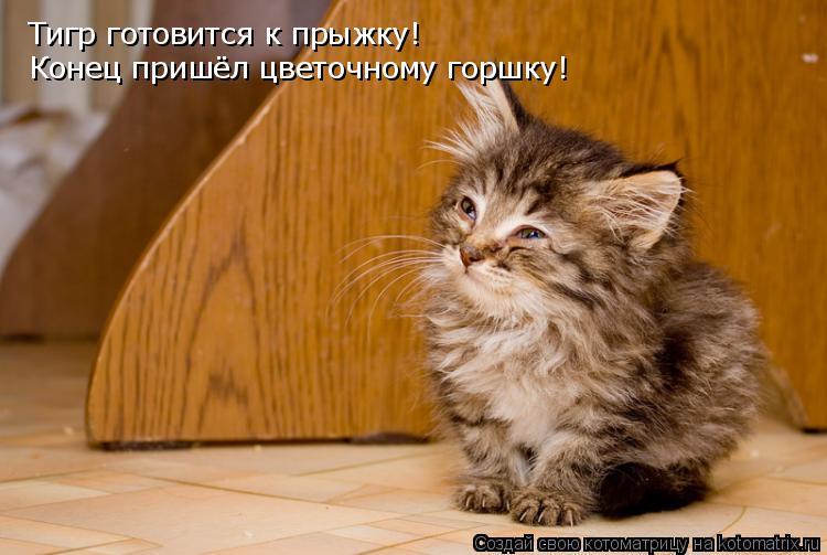 Котоматрица: Тигр готовится к прыжку! Конец пришёл цветочному горшку!
