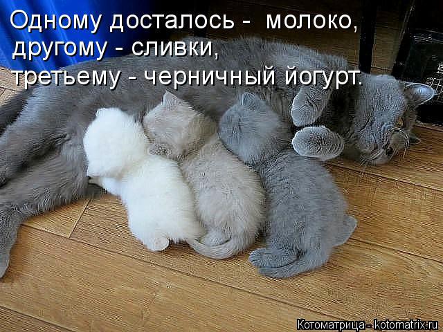 http://kotomatrix.ru/images/lolz/2014/12/01/kotomatritsa_D5.jpg