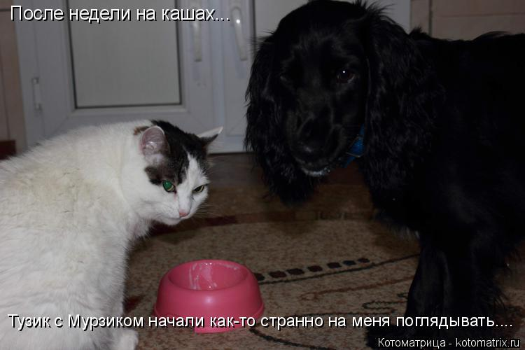 http://kotomatrix.ru/images/lolz/2014/12/01/kotomatritsa_N-.jpg