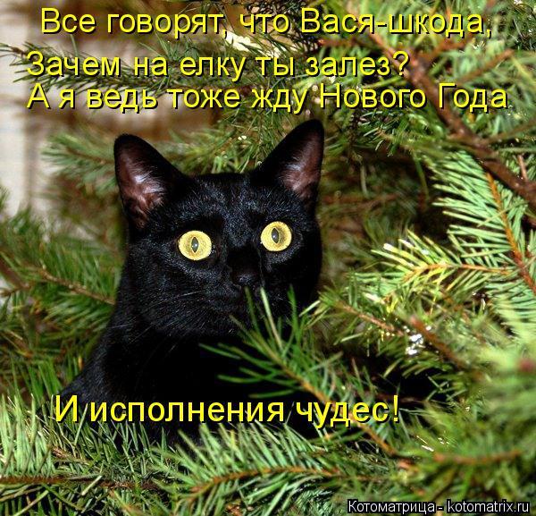 Котоматрица: Все говорят, что Вася-шкода, Зачем на елку ты залез? А я ведь тоже жду Нового Года И исполнения чудес!