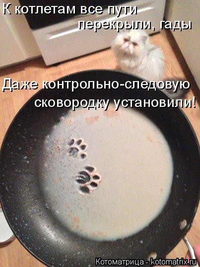 Котоматрица: К котлетам все пути  перекрыли, гады Даже контрольно-следовую  сковородку установили!