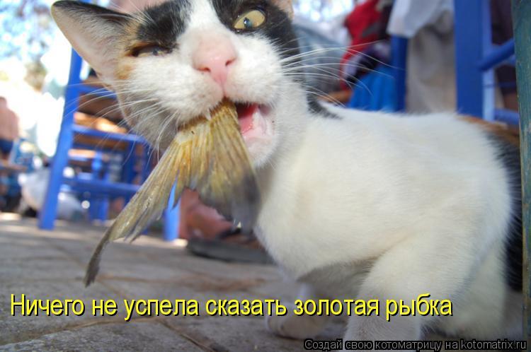 Котоматрица: Ничего не успела сказать золотая рыбка